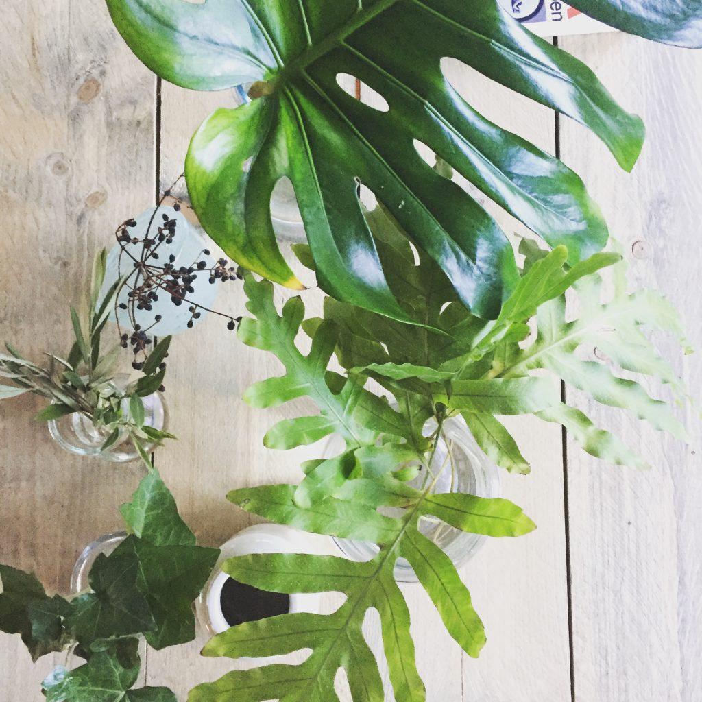 Minder hoofdpijn door planten, Friendly Reflex